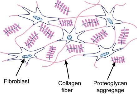 laza kötőszöveti regeneráció típusa