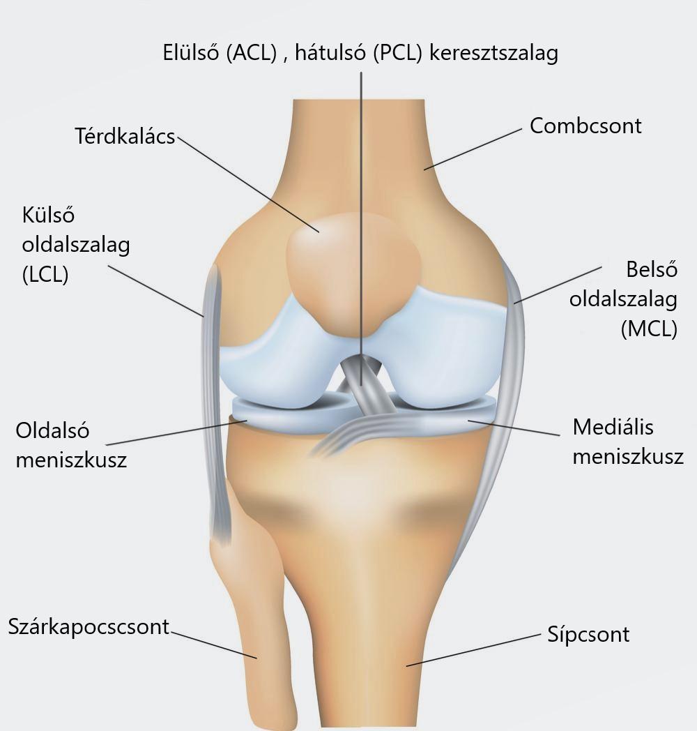 melegítse az ízületet artrózissal az osteoarthritis kezelése a szögben