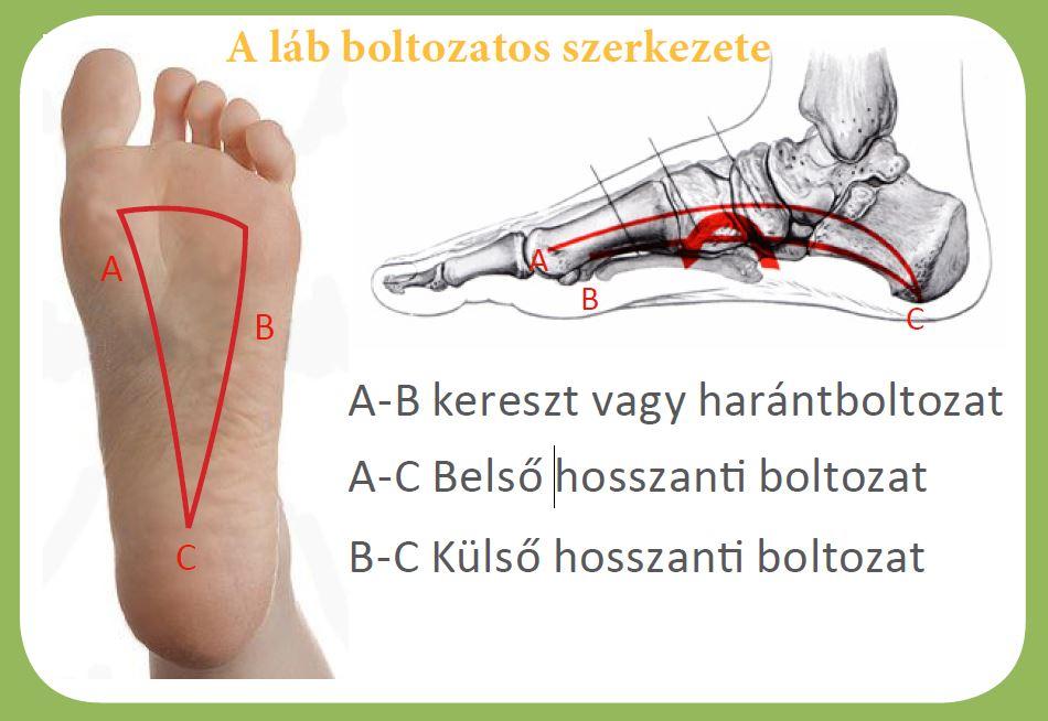 hogyan kell kezelni a lábujjak ízületeit könyök vízkezelés