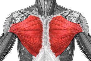 váll fájdalom a kar mozgása közben térdízületi ízületi tünetek és kezelés ár
