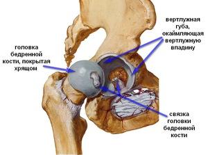 kezelje a karok ízületeit artrózis kezelése a térdízület 1-2 fokos artériája