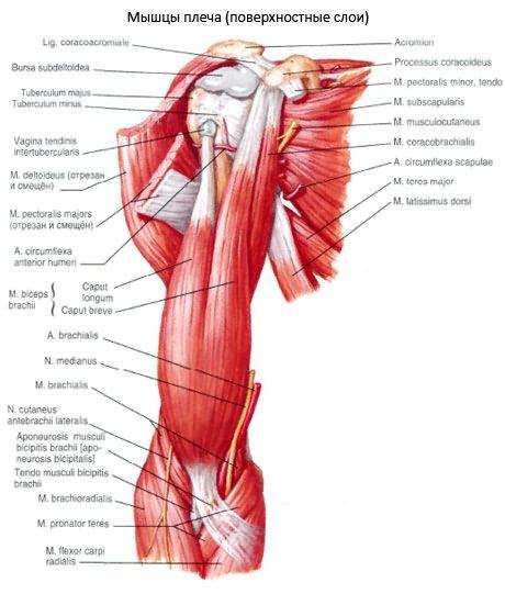 Vállízület arthrosis — tünetek, kezelés