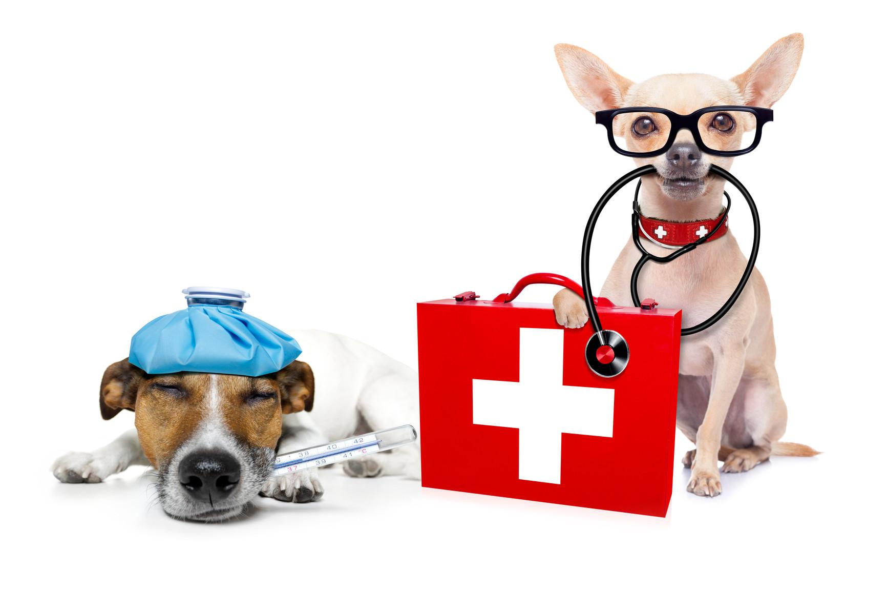 közös állatorvosi krém