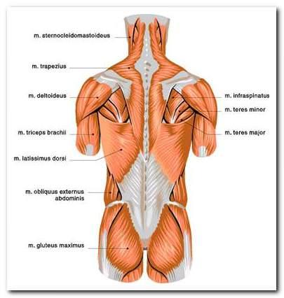 a könyökízület sérülése a sportolókban méhízületi kezelés