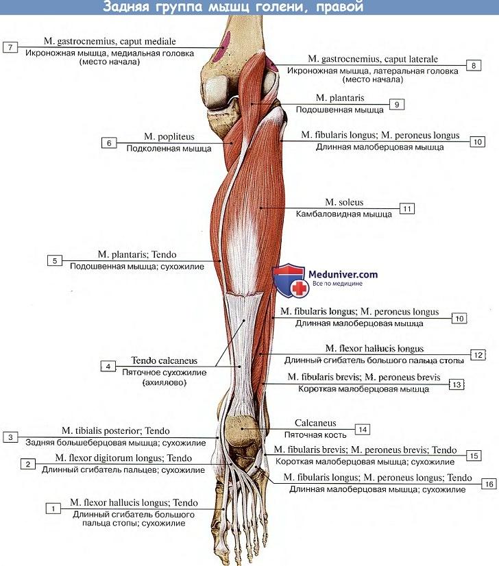 fájdalom az 1 ujj metatarsofalangeális ízületében
