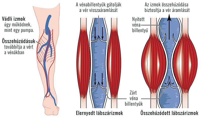 Égető lábfájdalom okai - fájdalomportákontrel.hu