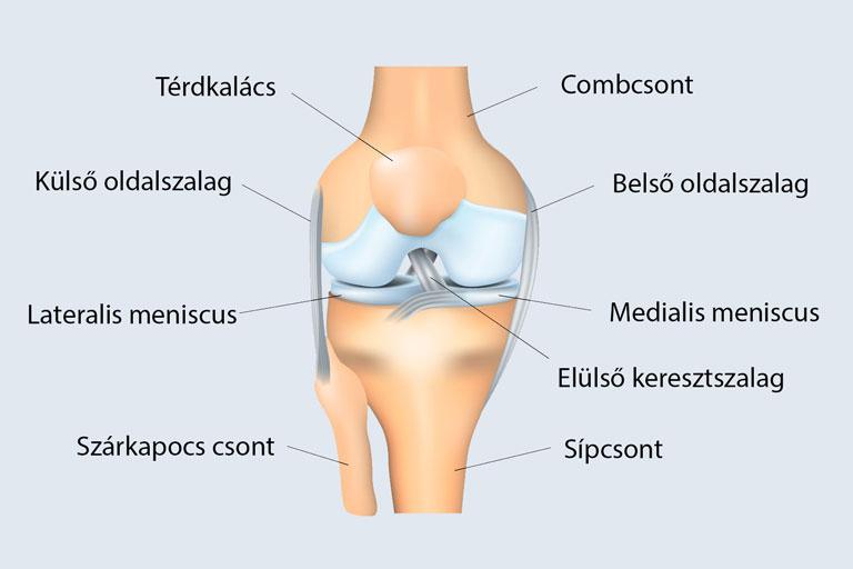 boka ligamentum károsodás kezelése