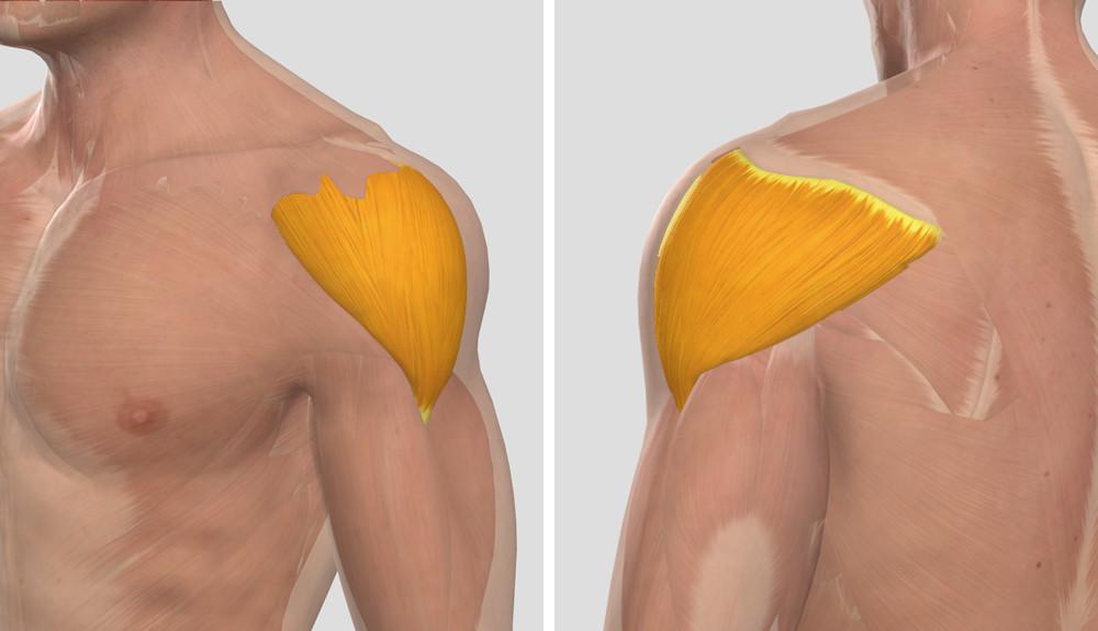 az artrózis kezelési rendje traumeellel artrózis klinikai kezelés