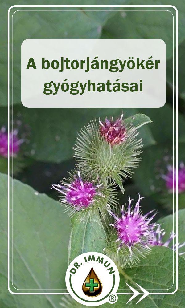Gyógynövény határozó - Bojtorján   Gyógynövények, Gyógyfüvek, Természetes gyógymódok