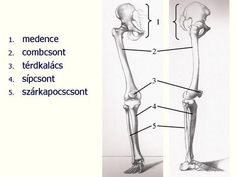 végtagi csontok és ízületek betegségei