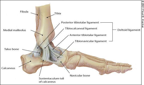 a belső felület boka fájdalma