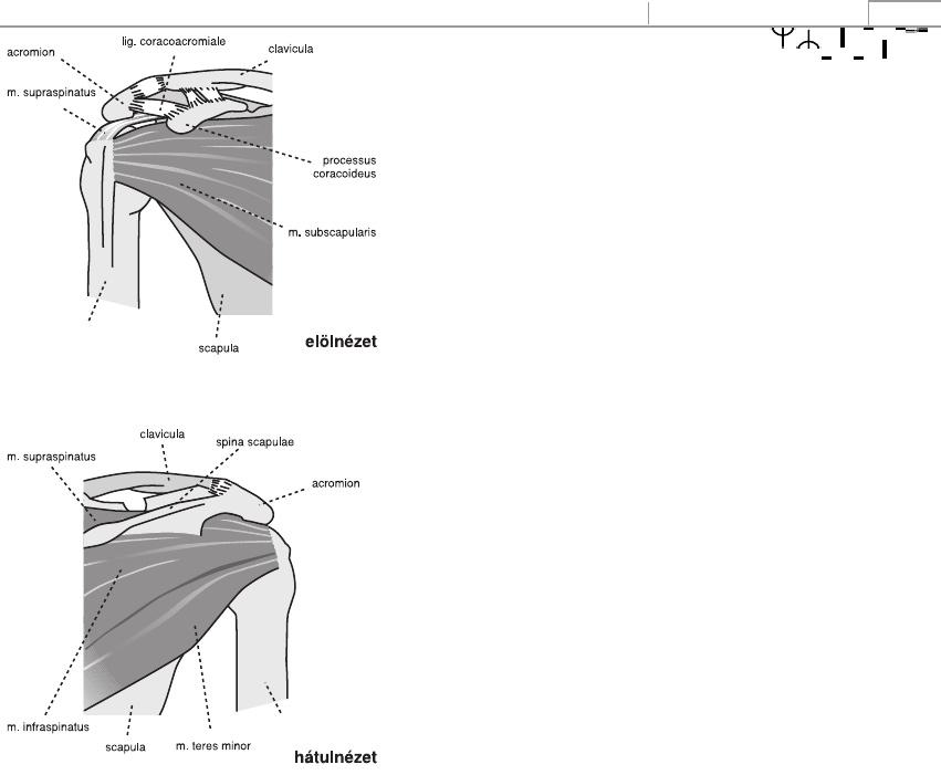 könyökízület kezelése kenőcsökkel ízületi gyulladásos kezelés szulfasalazinnal
