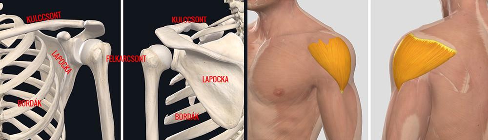 movalis vállízület artrózisával