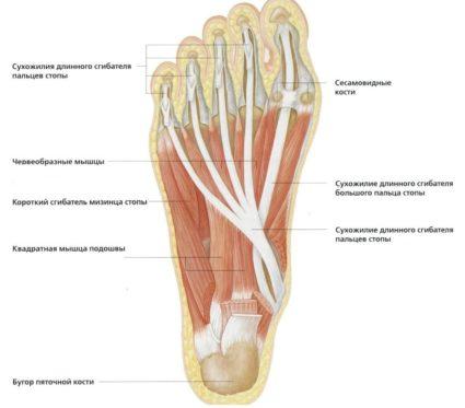 ízületi sérülések közös szerkezete kenőcs a könyök ízületének sprainjétől