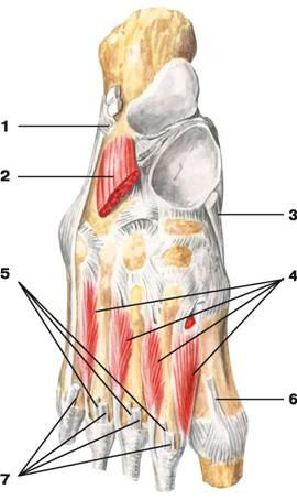 ízületi sérülések sprainokkal és inakkal intelligens krém ízületek áttekintésére