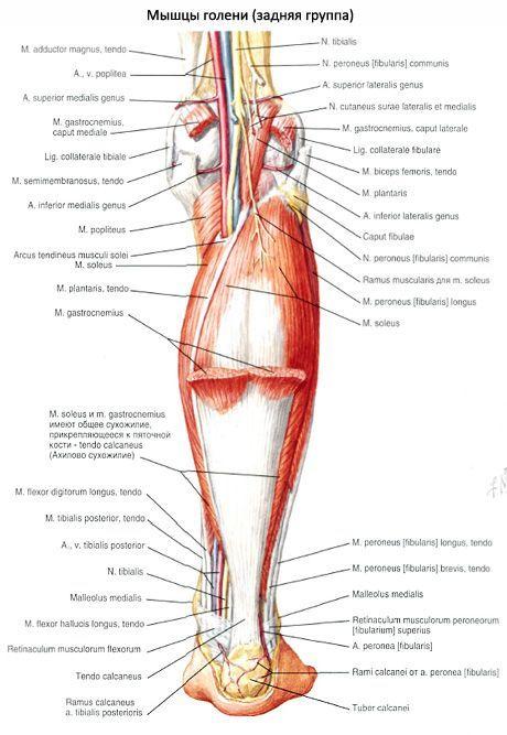 A boka ízületének szalagjai: tünetek és kezelés