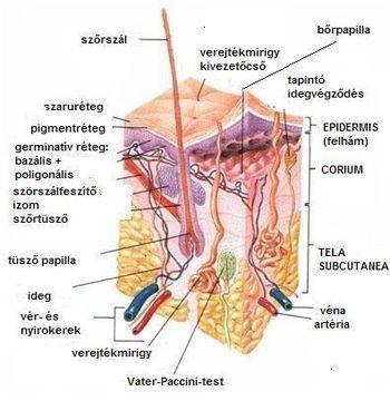 váll fájdalom gyakran rákos ízületek ízületi kezelés