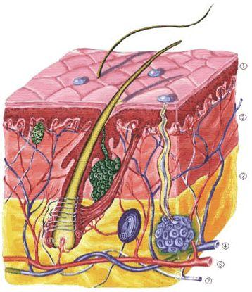 a térd ízületi gyulladása 3-4 fokos kezelés az ízület duzzanata a sarok törése után