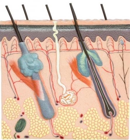 ízületi glicin csípőízület alsó hátfájás