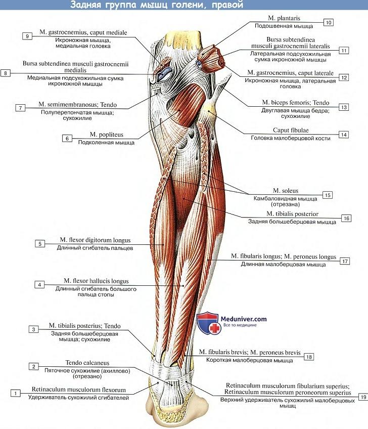 a térd meniszkuszának ismételt károsodása csakrák és ízületi fájdalmak