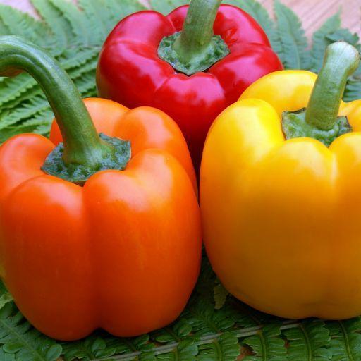 Minden, amit a chili paprikáról tudni kell