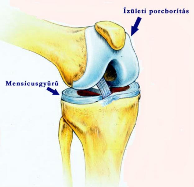 Reumatoid arthritis - Immunközpont