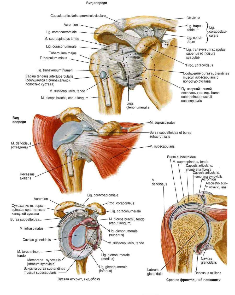 Subchondralis osteosclerosis - Köszvény July