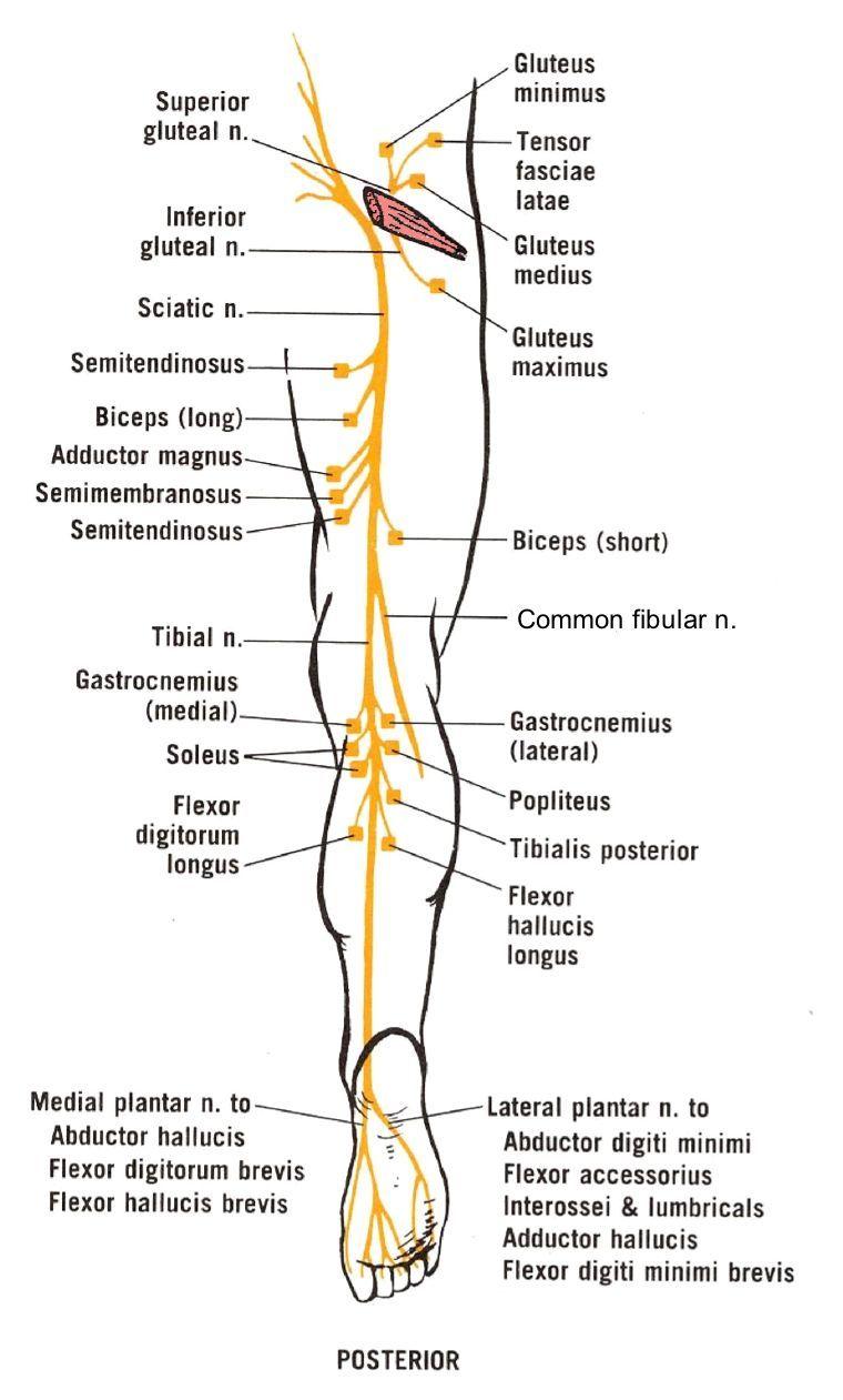 a sacroiliac ízületének ízületi gyulladása