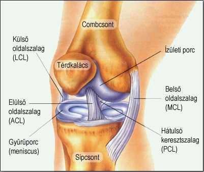 súlyos fájdalom az ízületekben és a hátban kezelje a szteroidokat ízületekkel