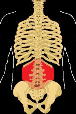 a hát alsó ízületének és izmainak fájdalma