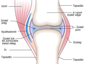 gomba gomba artrosis kezelése fájdalom a térdízületben, mit kell tenni