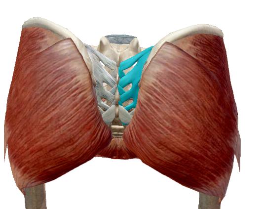 a láb ízületeinek gyulladásának tünetei