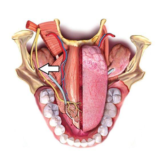 hüvelykujj ízületi kenőcs ízületek fáj a prednizonból