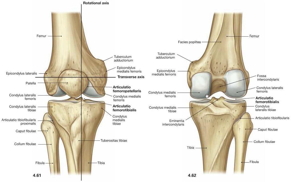 Térd- és könyökfájás kezelése - Dobi Imre csontkovács