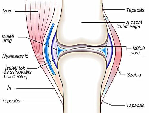térd combcsonti ízületi gyulladása nyaki gerinc kezelésének necrovertebrális osteoarthritis