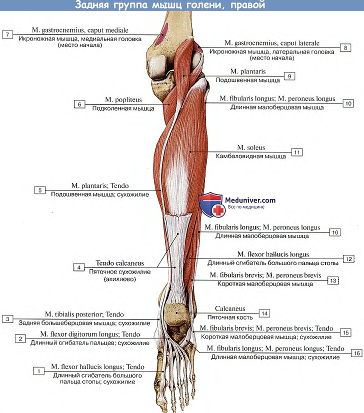 térdízület meniszkusza a vállízület gyulladása, mint a fájdalom enyhítése