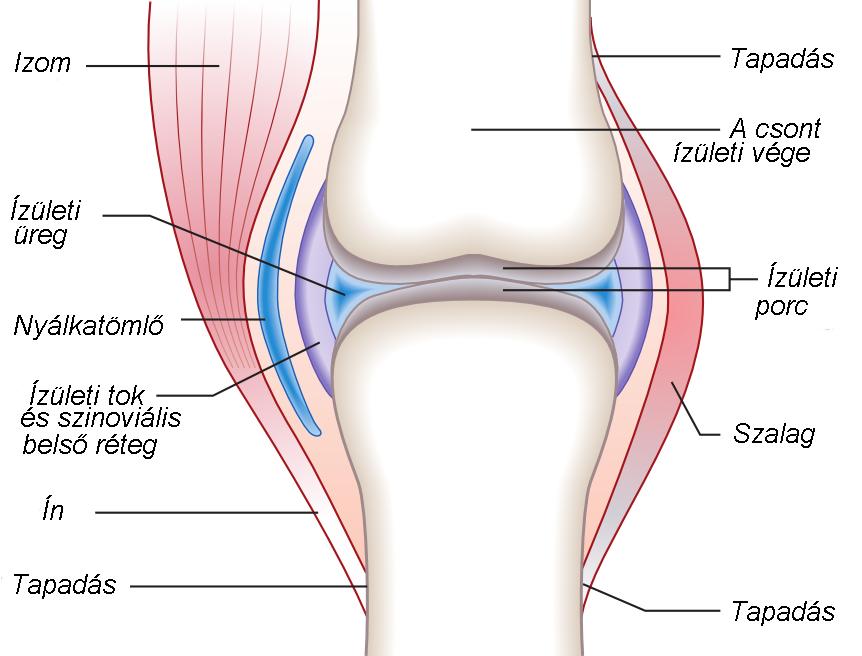 ízületek és csontok fertőző betegségei az ízület deformáló artrózisa